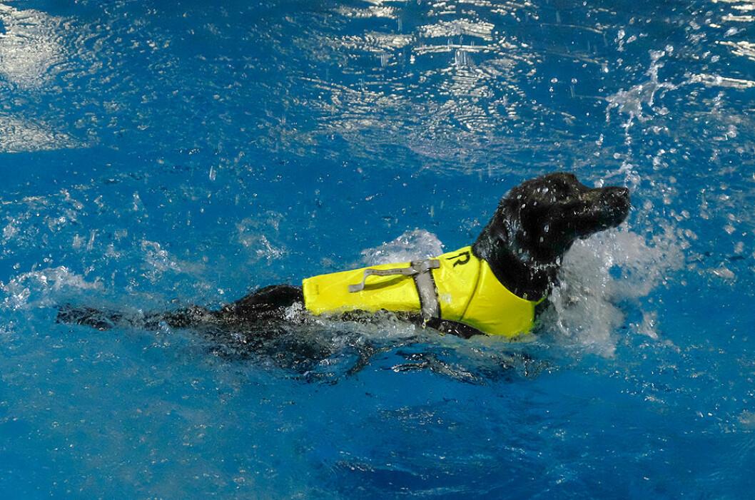 Hundevester støtter blindesaken