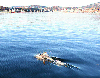 Flipper i Oslofjorden