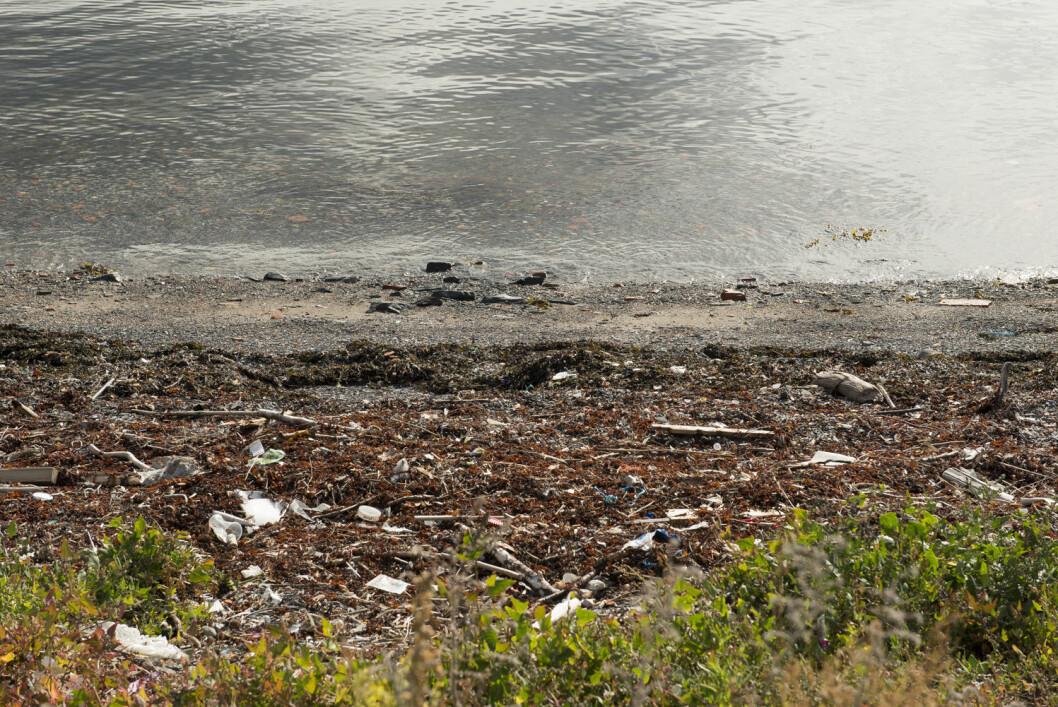 HOLD HAVET RENT: Seilforeningene skal engasjeres for å bidra med å redusere forsøplingen av havet. Nesodden Seilforening har allerede litt å ta av på Steilene.