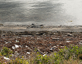 Enklere registrering av strand-søppel