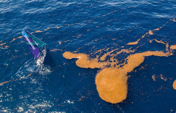 BREMS: Båtene har seilt gjennom områder med sjøgress som henger seg fast på kjøl og ror.