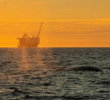 LIV: En hval dukket opp foran oljeplattformen Goliat.