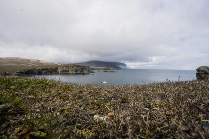BJØRNØYA: «Pelagic» til anker utenfor Bjørnøya, ekspedisjonens mål.