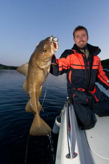 DRØMMEFANGSTEN ER SIKRET: En stor og flott torsk har tatt en stor gummishad midt i vannet i Bodø. Disse shadene har vist seg å være tidvis bedre enn pilk og fester seg ikke så lett i bunn.
