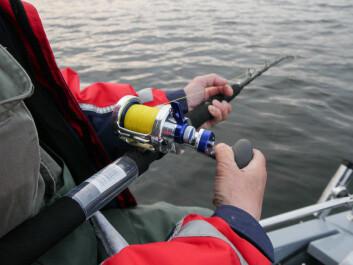 RIKTIG STANG: Bruk en stang som er klassifisert til den torsken du forventer å få! I øst og sør er det vanlig å bruke en 12-20lb stang og liten snelle for agnfiske og lett pilk/sluk. Til tyngre pilk er 20-30lb nok. ...