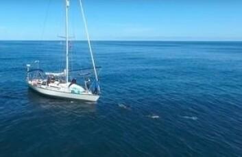 DRONE: Gutta fikk filmen båten med delfiner fra luften.