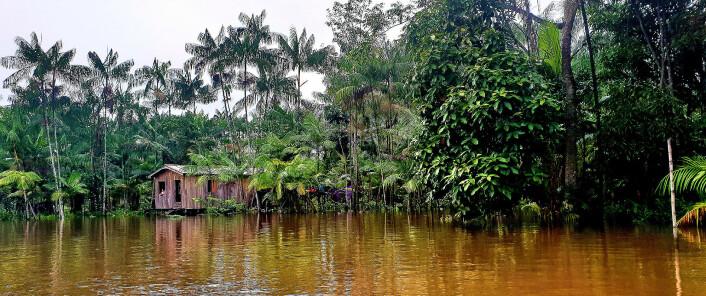 ELV: Bull er i Brasils fattigste område, men også det mest biodiverse området på kloden.