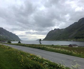GRUNDT: Skjelfjorden er en fjordarm på sørsiden av Flakstadøya i Flakstad kommune i Lofoten.