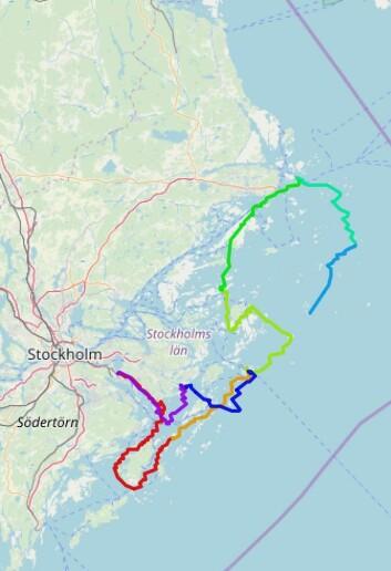 BANE: Det ble seilt åtte etapper i Stockholms skjærgård under regattaen.