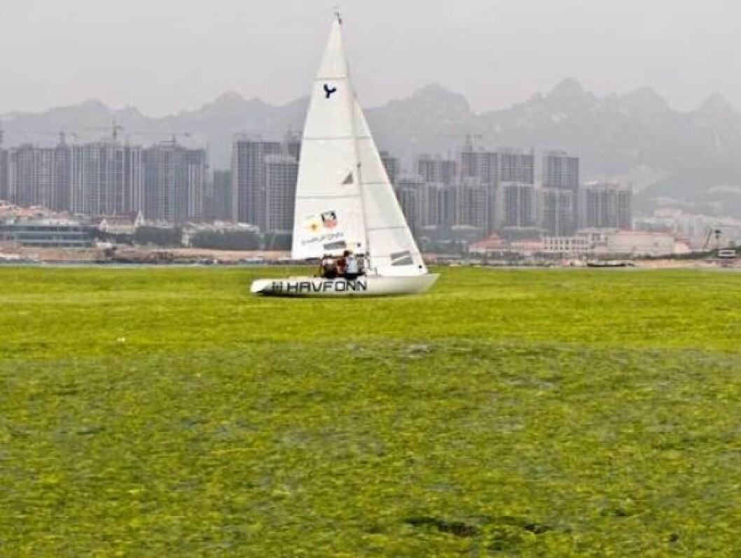 Kineserne kjemper mot algene