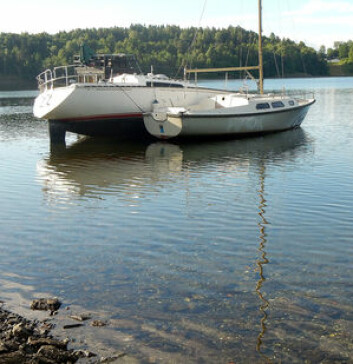 ASKER: C&C30 er den samme som lå i Sandvika, mens Firlingen lå ved Saraholmen. Nå ligger båtene i Leangbukta. C&C30 uten nok vann under kjølen.