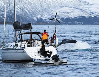 Danser med hvaler