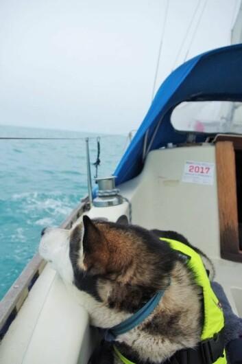 TENKER PÅ HUNDEN: En av hoveddgrunnene til at Opal vil ha daglige stopp er at hun vil at hunden skal ha det bra