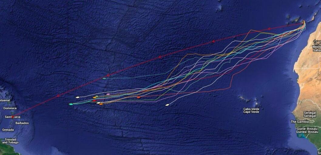 NORSKE: Kartet viser de norske ARC-deltagernes plassering 6. desember.  Båtene i tet har 420 nm igjen, mens den bakerste har 1314 nm.