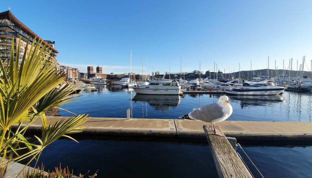 IKKE SYDEN: Midt i februar lå Aker brygge badet i solskinn, og båtlivet var i gang i Oslo.