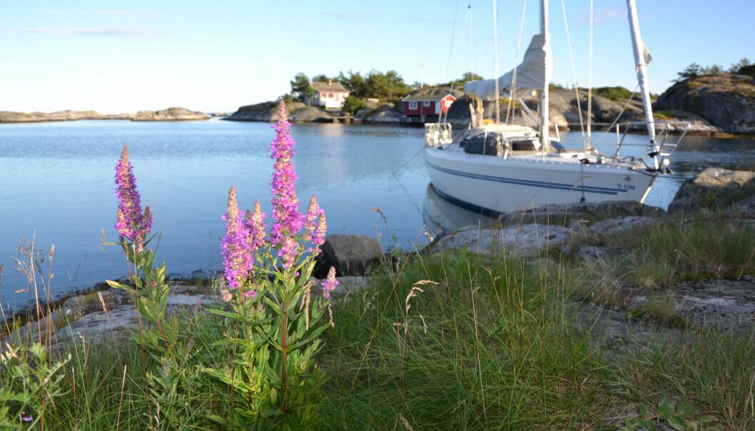 IDYLL: Selv midt på sommeren finnes det naturhavner hvor man kan ligge i god avstand fra andre.