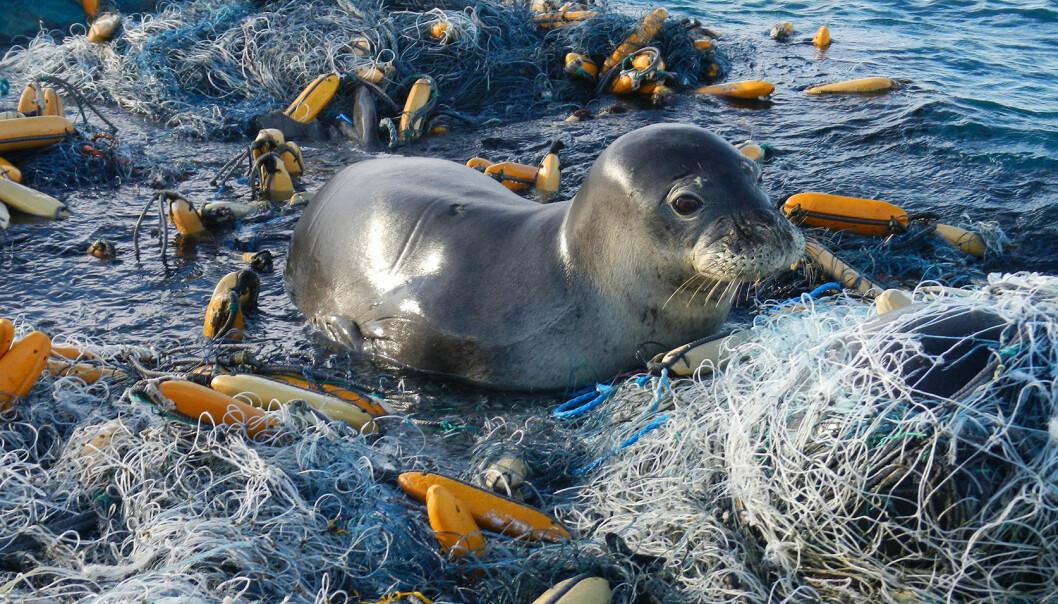 PLAST I HAVET: Plast i havet er en trussel for dyrelivet – og i neste omgang for alle mennesker. At havet funker, er fundamentalt.
