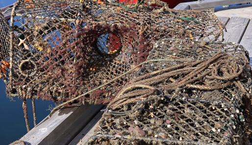 Mange tusen teiner driver evig fiske