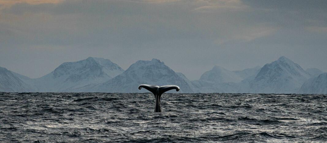 """""""Barba"""" skal studere majestetiske pattedyr og bidra til å bevare miljøene vi elsker å seile i."""