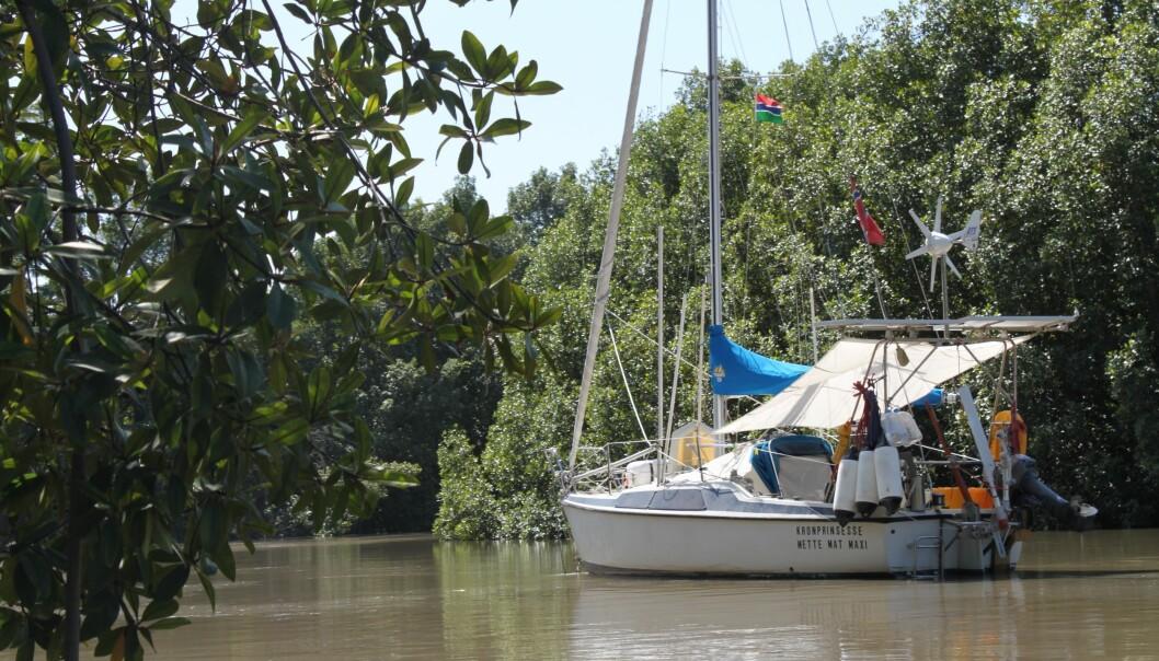 AFRIKA: Sideelvene i Gambia bød på eksotiske opplevelser alene blant mangroveskog og dyreliv